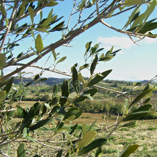 Olivenmarkt