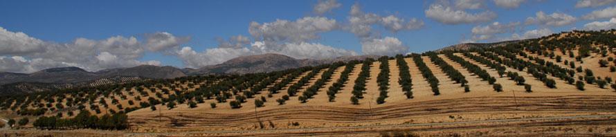 Olivenholz im Stil der Provence kaufen